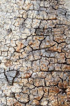 Free Tree Bark Background Royalty Free Stock Photos - 24490988
