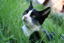 Free Cat On The Grass. Stock Images - 24491944