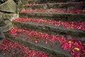 Free Stairs Stock Photo - 2455590