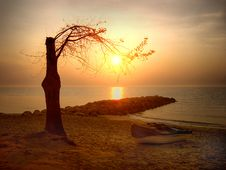 Free Tree On The Beach Stock Photography - 2452682