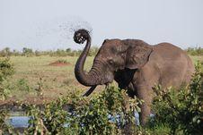 Elephant Catharine Wheel Royalty Free Stock Photo