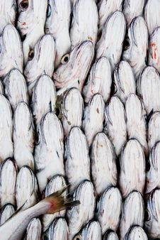 Free Fishes Stock Photography - 2454252