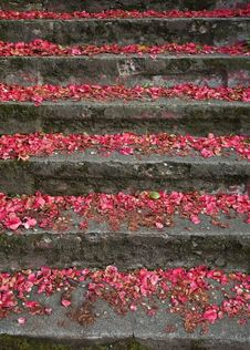 Free Stairs With Petals Royalty Free Stock Photo - 2455535