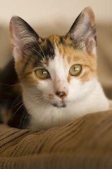 Free Kitten Stock Photography - 2455542