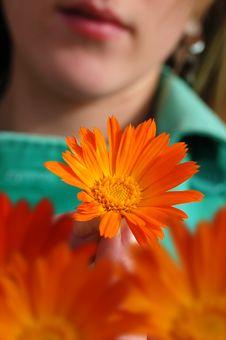 Free Orange Flower Girl Royalty Free Stock Photo - 2455805