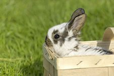 Free Sweet Easter Bunny In The Box Royalty Free Stock Photography - 2455837