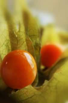 Free Gooseberry (Physalis) Royalty Free Stock Photography - 2456107