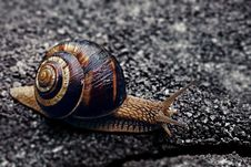 Free Snail Stock Photos - 2457483