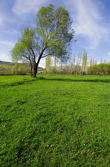 Free Green Field Stock Photo - 2458000