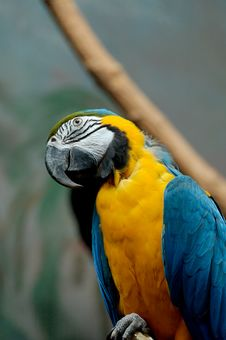 Free Parrot Royalty Free Stock Photos - 2458538
