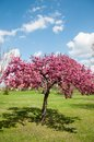 Free Spring Blossom In A Colorful Park Royalty Free Stock Photo - 24501915