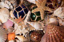 Free Cluster Of Seashells Stock Image - 24503621