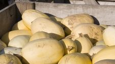 Free Honeydew Melons Stock Photos - 24507323