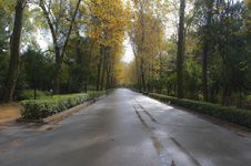 Free Autumn In Seville Royalty Free Stock Images - 24507989