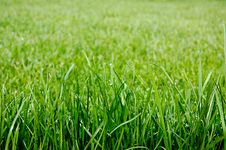 Free Green Grass Stock Image - 24508001