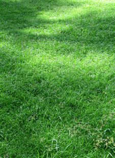 Free Green Grass In The Nature Royalty Free Stock Photos - 24508728