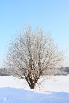 Free Tree In The Field. Frost. Stock Image - 24512261