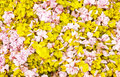 Free Fallen Blooms Stock Photo - 24529190