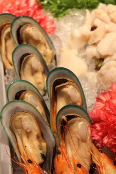 Free Mussel Royalty Free Stock Photography - 24526417