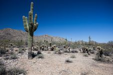 Free Arizona Desert Scenery Stock Photos - 24533183