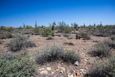 Free Arizona Desert Scenery Royalty Free Stock Photography - 24533187