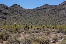 Free Arizona Desert Scenery Stock Photography - 24533192