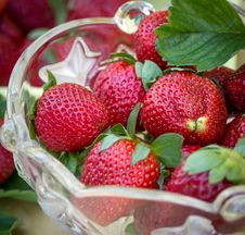 Free Ripe And Fresh Strawberries Royalty Free Stock Photo - 24533345