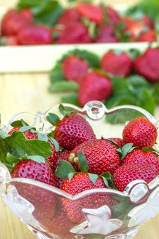 Free Strawberries Stock Images - 24533404