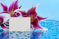 Free Flowers With Blank Card Royalty Free Stock Photos - 24536058