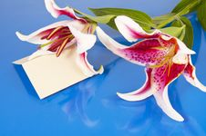 Free Flowers With Blank Card Stock Image - 24536071