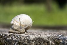 Free Snail Stock Photography - 24538522