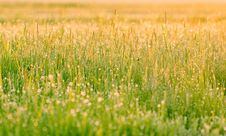 Free Grass Covered With Dew Stock Images - 24539014