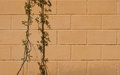 Free Stone Wall With Grapevine Royalty Free Stock Images - 24545529