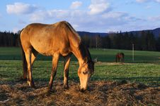 Free Horse On Pasture Royalty Free Stock Photos - 24541718