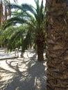 Free Palms Stock Image - 24559481