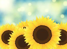 Free Sunflowers Stock Photography - 24552062