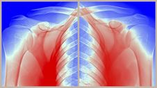 Free Painful Shoulder Royalty Free Stock Image - 24552616