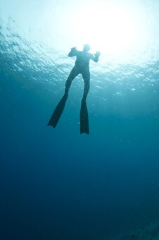 Free Free Diver Stock Images - 24555294