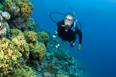 Free Scuba Diver On A Coral Reef Royalty Free Stock Photo - 24555635