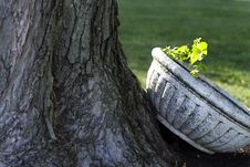 Free Sunlit Planter By Tree Royalty Free Stock Photography - 24560817