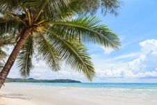 Free Coconut Tree On The Beach Stock Photography - 24560952