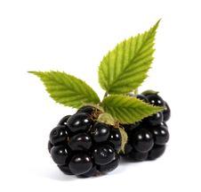 Free Blackberries Stock Photography - 24562312