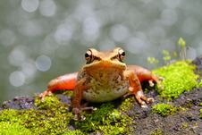 Free Resting Frog Stock Photo - 24566140