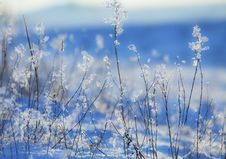 Free Flower Shaped Icicles Royalty Free Stock Photo - 24566265