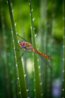 Free Yellow Dragonfly Stock Photo - 24566600