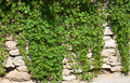 Free Stone Wall With Wild Grapes Stock Photography - 24575822