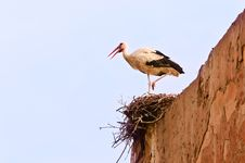 Free Stork In The Nest Royalty Free Stock Image - 24573206