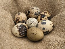 Free Quail Eggs. Royalty Free Stock Photos - 24577388