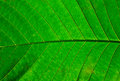 Free Green Leaf Texture Stock Images - 24582974