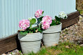 Free Two Pot With Flowers Outdoor Royalty Free Stock Photography - 24585167